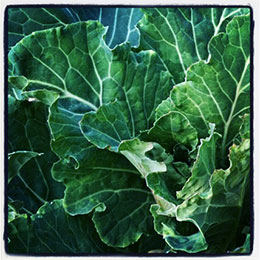 Collards: Not Just for New Year's Anymore